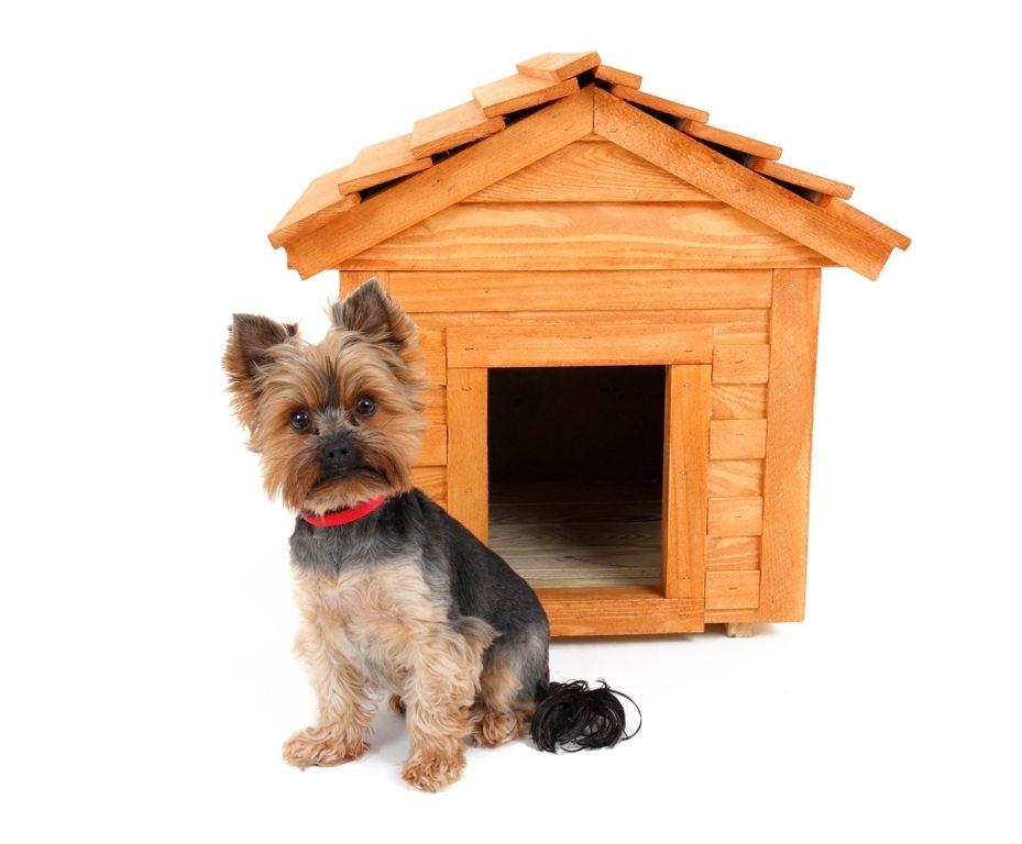 C mo hacer una caseta de perro animalesmascotas - Como hacer una caseta de obra ...