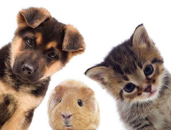consejos-para-elegir-una-mascota-cuando-ya-tenemos-una-mascota
