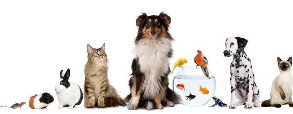 consejos-para-elegir-una-mascota-en-funcion-de-cada-animal