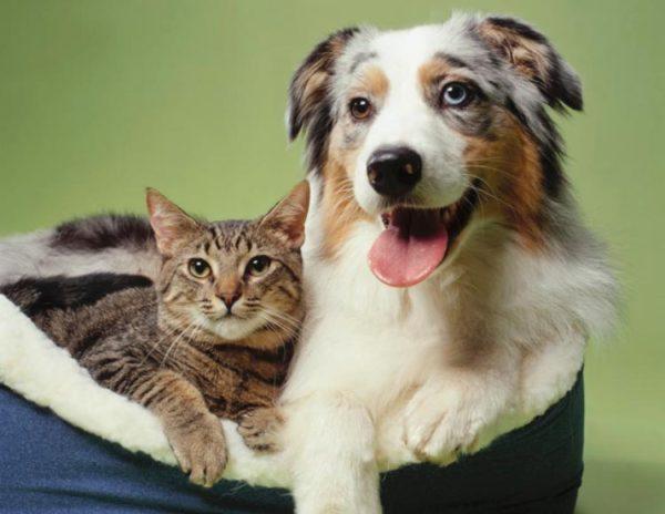 el-horoscopo-y-la-personalidad-de-nuestros-perros