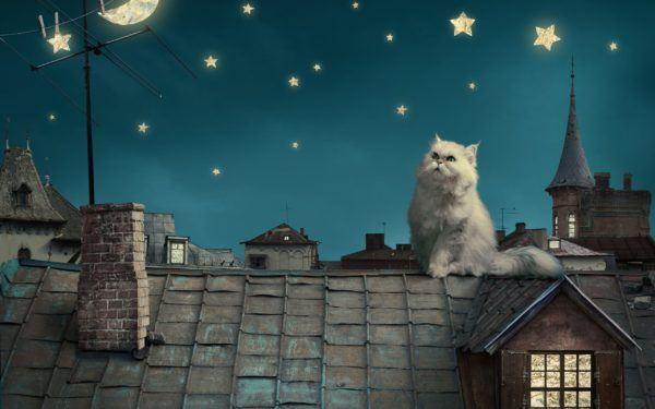 el-horoscopo-y-la-personalidad-de-nuestros-perros-y-gatos
