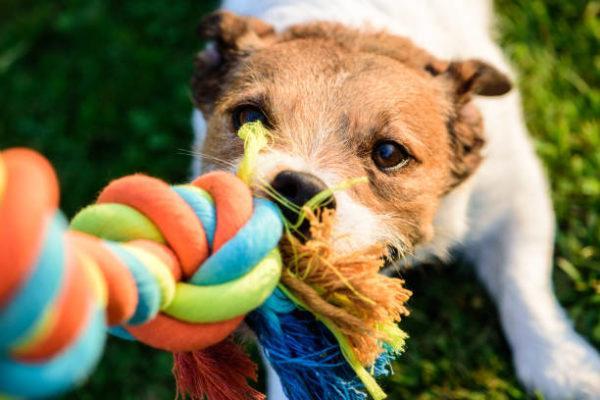 Ordenes perro coge suelta