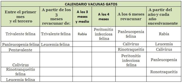 Vacunas Gatos Calendario.El Calendario De Vacunas Para Perros Y Gatos Para 2019