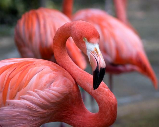 Pajaros aves exoticas flamencos