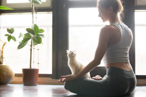 Beneficios tener gato
