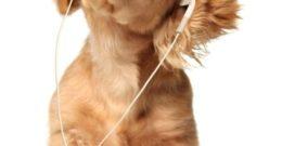 Música relajante para perros: Beneficios y consejos