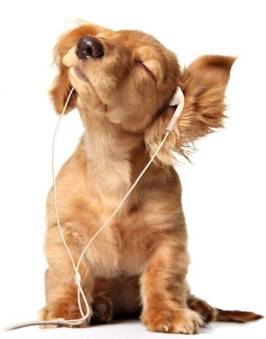 Musica relajante para perros cascos