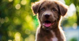 60 nombres graciosos para Perros