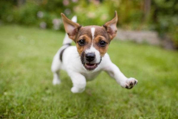 Nombres graciosos para perros