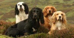 10 Razas de Perros Medianos