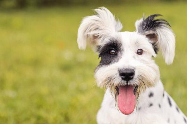 Nombres de perros graciosos