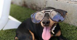 11 Razas de Perros Pequeños
