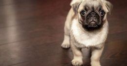 Ahuyentadores de perros – Uso, efectividad y precios
