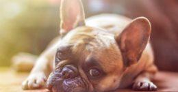 Los mejores nombres mitológicos y su significado para perros