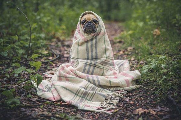 nombres-mitologicos-perro-envuelto-en-manta