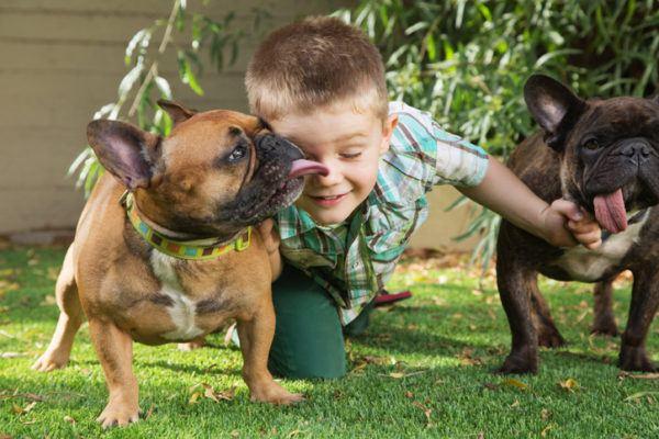 Perros para ninos bulldog frances