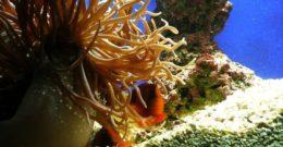 Plantas para acuario – Tipos, modelos y fotos