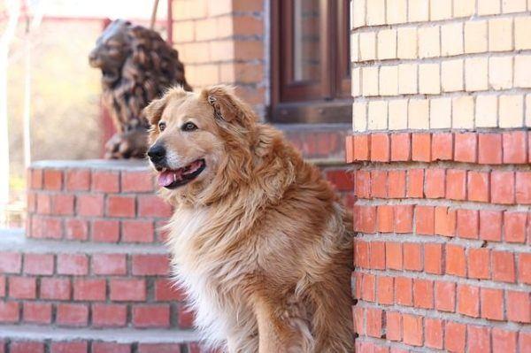 precio-de-los-ahuyentador-de-perro-perro-edificio-ladrillos