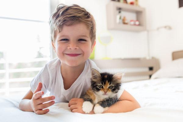 Beneficios de tener un gato compania