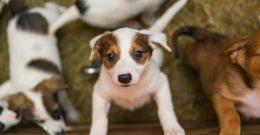 Las 10 preguntas más frecuentes en el veterinario