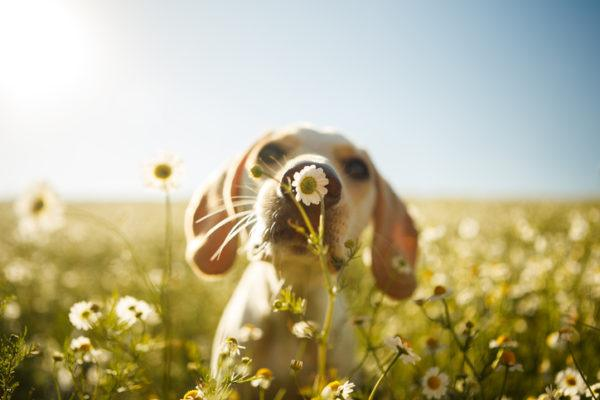 Plantas alimentos y medicamentos que son veneno para perros cuidado