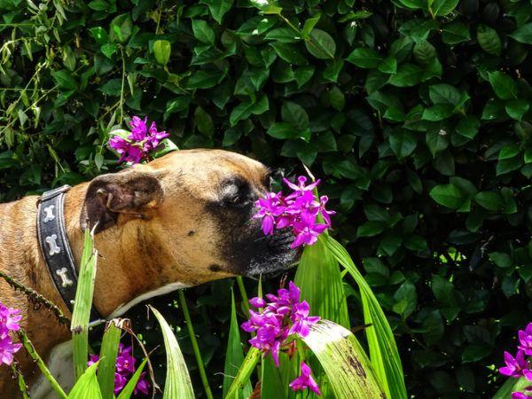 Plantas que son veneno para perros
