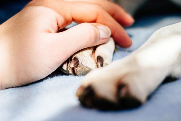 Por que se produce la epilepsia en los perros