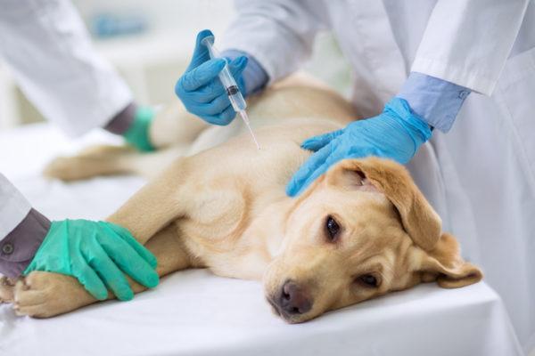 Por que se produce la epilepsia en los perros tratamiento y prevencin