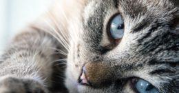 Animales domésticos – Qué son, características, tipos y ejemplos