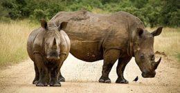 Qué animales están en peligro de extinción