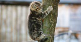Gatos pequeños – razas, cuidados y fotos