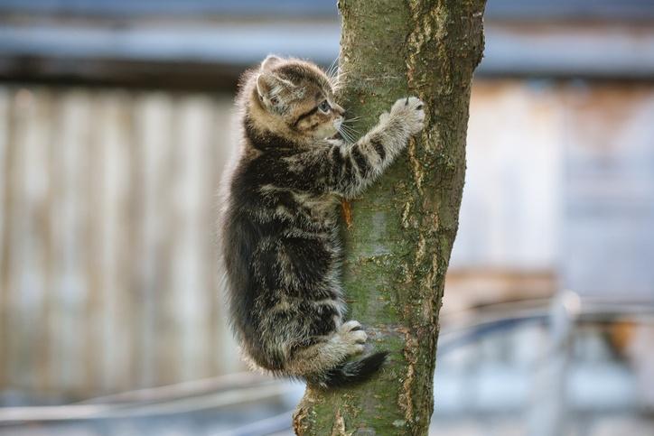 Gatos pequeños rusty