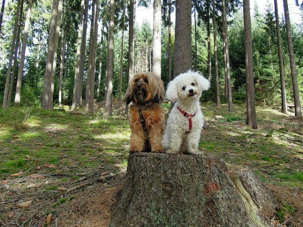 los-perros-mas-pequenos-del-mundo3