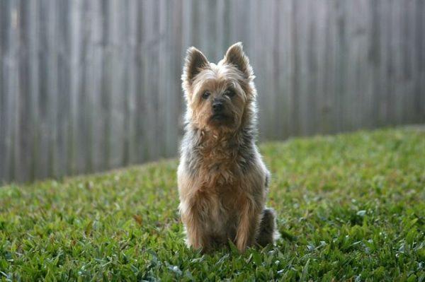 los-perros-mas-pequenos-del-mundo9