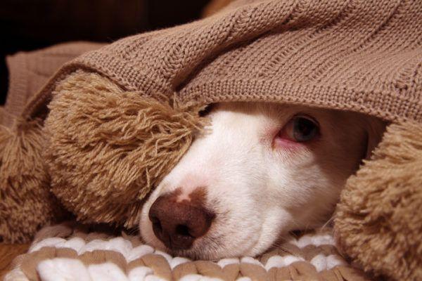 Infecciones urinarias en los perros causas sntomas y tratamientos apatico