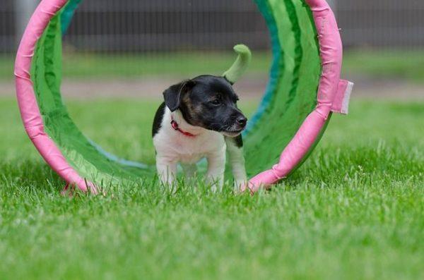 mejores-juegos-para-cachorros