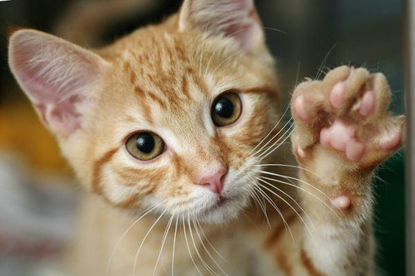 como-tratar-la-alergia-a-los-gatos-istock