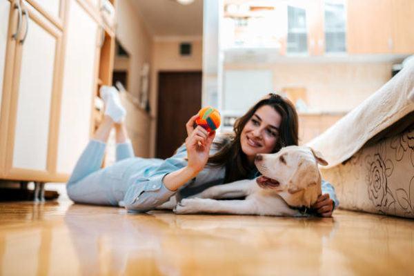Los mejores juguetes caseros para perros