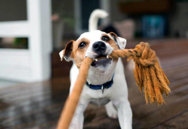 Los mejores juguetes juegos caseros para perros