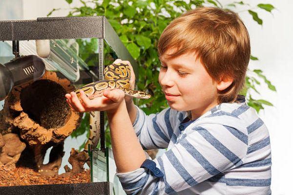 Como cuidar animales exoticos clave consejos