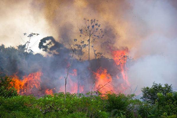 Los animales mas afectados por los incendios del amazonas fuego