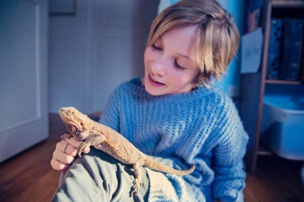 Como debo de cuidar a mi reptil cuidados
