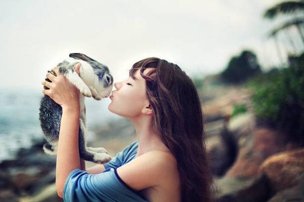 Como que cuidar a un conejo