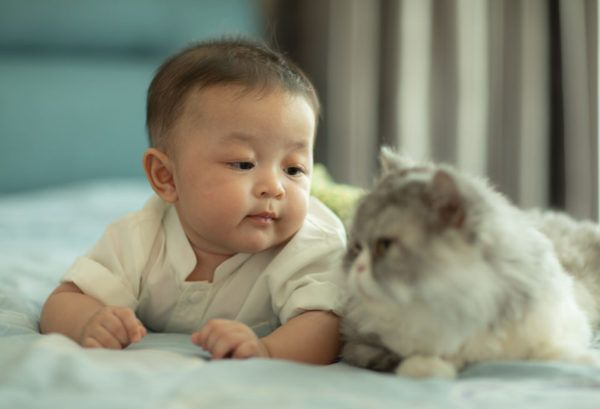 La conexión del gato con bebés y niños