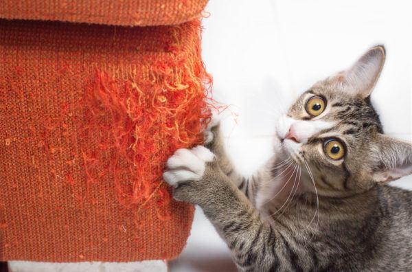 Cómo evitar que el gato arañe la silla o el sofá