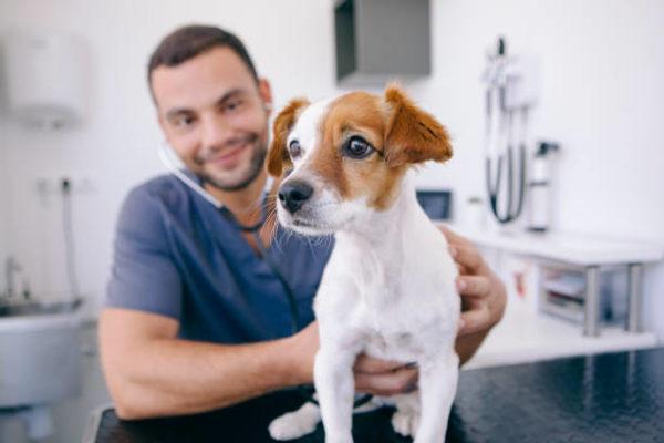 Las claves para elegir un buen veterinario