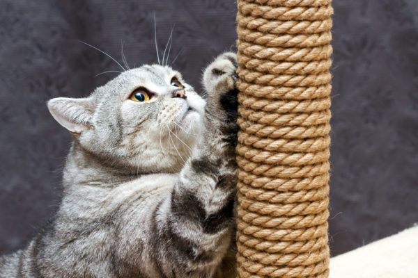Poste de rascado para gatos