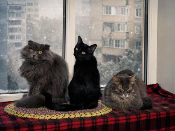 Cómo presentar al gato con otros gatos