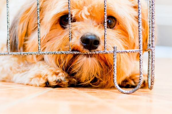 Ventajas al adoptar un animal