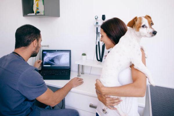Gastroenteritis en perros sintomas tratamient cuanto dura